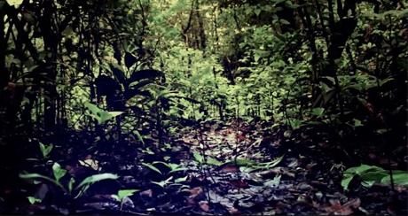 Em um bosque muito escuro